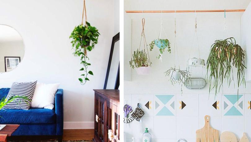 Roof Hanging Plants