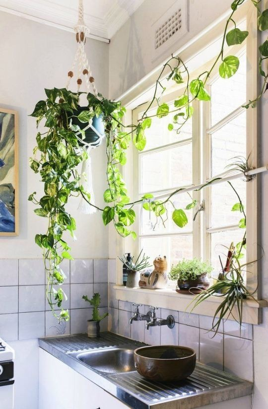 Roof Hanging Plants4