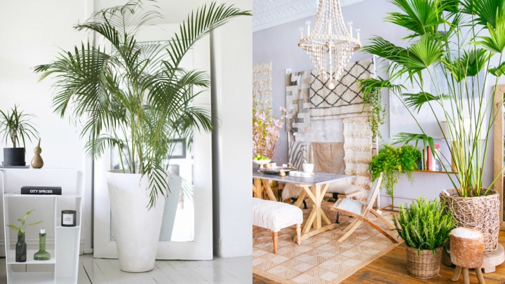 How To Decorate With Tropical Style Real And Origin