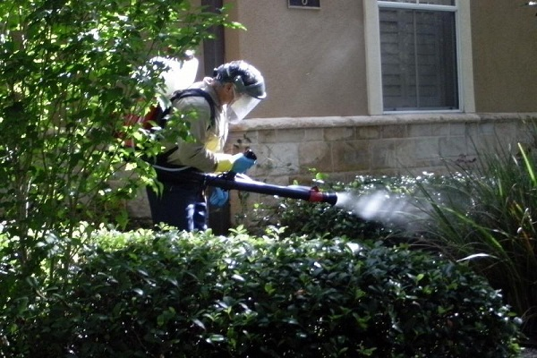 Proven Ways to Keep Mosquitoes Out Of Your Home