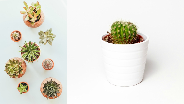 Plants to decorate
